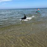 #dogfifty freut sich über den Hundestrand