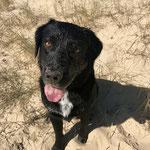 #dogfifty. Fifty liebt es, im Sand zu buddeln und unerschrocken im Atlantik zu schwimmen