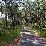 Radweg bei Mimizan