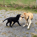 Spielen mit anderem WoMo Hund