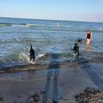 Badespass am Hundestrand