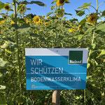 Bioland Sonnenblumen
