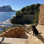 Wanderweg am Meer entlang mit #dogfifty
