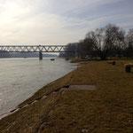 Rhein Richtung Karlsruhe