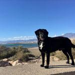 #dogfifty auf der Begrenzungsmauer im Hafen von Almerimar am SP