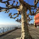 Meersburg Uferpromenade am 24.12.2015
