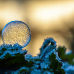 #017 - iced bubble 03