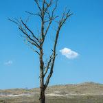 "#011 - Nationalpark ""Schoorlse Duinen"", NL"