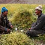 L'heure du thé - Ladakh