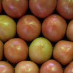 福井のトマト