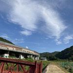 深山寺の生産者さんの圃場から見上げた景色