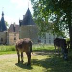 Château de Commarin