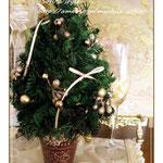 プリザーブドのモミのクリスマスツリー