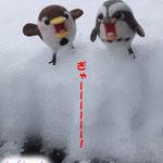 ゼッキョちゃん達が、積雪で絶叫w