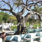 """Dieser Baum auf dem Friedhof hat es mir """"angetan"""""""