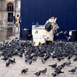 Und dann waren da noch die Tauben!