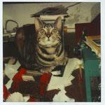 kat spoerri op werkplek