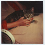 kat spoerri op schoot