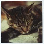 kat spoerri op krant