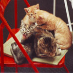kat spoerri met jonkies