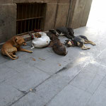 let sleeping dogs lie (barcelona)