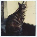 kat spoerri op vensterbank