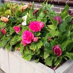 Bloembakken, bloembakken buiten, bloembak, plantenbak