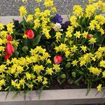 Bloembakken, bloembakken buiten, bloembak, plantenbak k