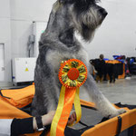 "IDS ""RUSSIA"" 2015 - BOB, CACIB and Champion of this show"