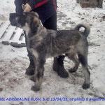 AKAREL ADRENALINE RUSH (Russia)