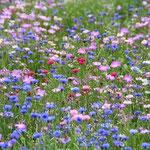 見事に咲いた花いっぱいミックス