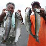 ■釣り人:加藤様/岡本様                 ■場 所:近江舞子沖                 ■サイズ:50cm頭に多数匹