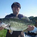 ■釣り人:お客様                 ■場 所:フレンズ沖                 ■リ グ:ペンシル                 ■サイズ:47cm