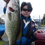 ■釣り人:森安 様                 ■場 所:名鉄沖                 ■リ グ:アラバマ                 ■サイズ:45cm