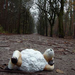 wohlfgang pudelgewohlt im grunewald