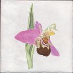 Reproduction d'une orchidée-Atelier Pascale B.-Pascale Stella Brigand