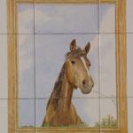 Portrait d'un cheval corse