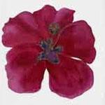 Fleur d'hibiscus, coeur en or