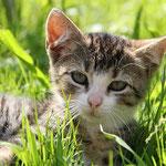 Eine der Katzen