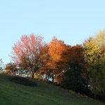Bute Farben im Herbst