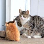 Unsere Katzen beim Milchtrinken