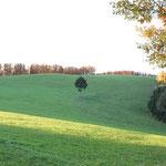 """Auf unserem Feld der """"Eck"""" , immer schön für ein tolles Fotomotiv"""