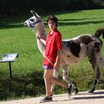 Lama, auch bunt