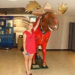 my Elk :)