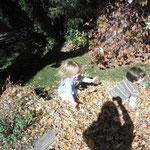 Taryn spielt im Laub