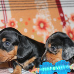 sisters Tsarina & Tsyana (4 weeks)