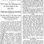 Brooklyn Eagle - Long Island Drought Has Hit Queens Farmers Hard - July 27,  1910