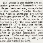 Hemstead Sentinel - Horseradish - Dec. 12, 1901