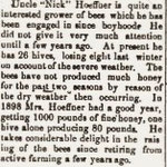 "Hempstead Sentinel - Uncle ""Nick"" Hoeffner and his Bees - May 8, 1901"