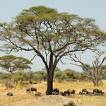 Tarangire National Park, the first place we visited in Tanzania
